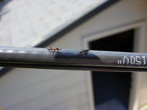 ant control portland