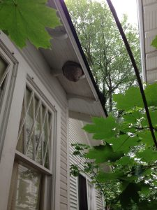 Large bee nest on house.