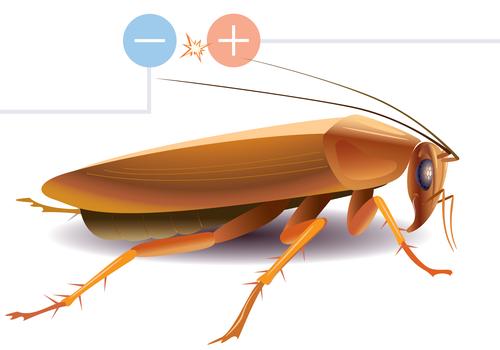 Image od a cockroach