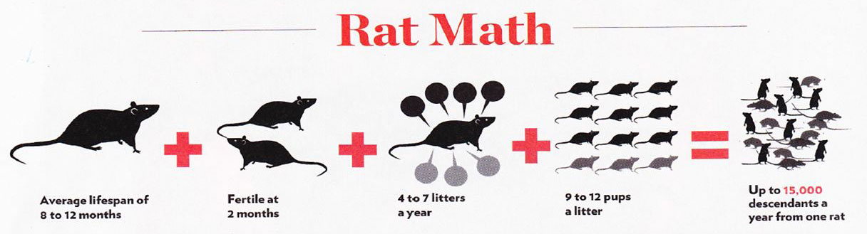 Rodent Birth Rates